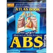 ABS آناتومی تنه